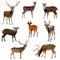 Stock Image : Deer.