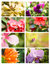 Stock Image : Design cards with floral collection
