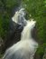 Stock Image : Devil's Kettle Waterfall