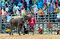 Stock Image :  Die nicht identifizierten Männer steuern ihren Büffel für das Laufen in einen laufenden Sport