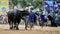 Stock Image :  Die nicht identifizierten Männer steuern ihren Büffel für das Laufen in einen laufenden Sport, und die nicht identifizierten Dorf