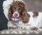 Stock Image :  Dientes de perro divertidos