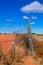 Stock Image : Dingo Fence
