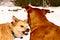 Stock Image : Dog aggression