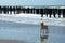 Stock Image : Dog on a beach