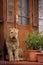 Stock Image : Dog guarding