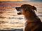 Stock Image : Dog