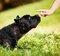 Stock Image : The dog watching at the human hand