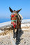 Stock Image : The donkey in Thira