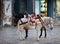 Stock Image : Donkeys on Hydra in Greece