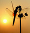 Stock Image : Dragonfly the morning sun
