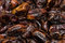 Stock Image : Dried Plums