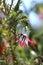 Stock Image : Dzwonkowy Kwiat