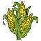 Stock Image : Ears of corn illustration