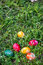 Stock Image : Easter eggs on the lawn