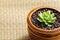 Stock Image : Echeveria plants
