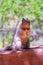 Stock Image : Eekhoorn op een handtraliewerk