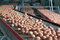 Stock Image : Eggs on a poultry factory
