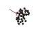 Elderberry Sprig