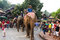 Stock Image : Elephant procession for Lao New Year 2014 in Luang Prabang, Laos