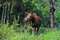 Stock Image : Elk
