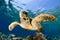 Stock Image : Eretmochelys imbricata - hawksbill sea turtle