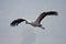 Stock Image : Eurasian crane