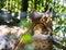 Stock Image : Eurasian lynx