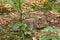 Stock Image : European Wild Cat (Felis silvestris) sitting between bushes.