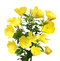 Stock Image : Evening Primrose