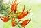 Stock Image : Exotic fiery orange flower