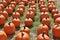 Stock Image : Fall Pumpkins