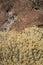 Stock Image : Fall Rabbit Brush over Stone
