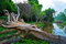 Stock Image : Fallen tree