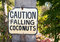 Stock Image : Falling coconuts