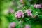 Stock Image : Favourite Season - Spring