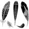 Stock Image : Feathers