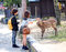 Stock Image : Feeding deer in Nara, Japan 2