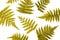 Stock Image : Fern leaves