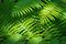 Stock Image : Fern nature background