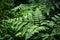 Stock Image : Ferns