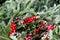 Stock Image : Festive holiday wreath