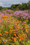 Stock Image : Fields of flowers