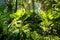 Stock Image : Fijian tropical jungle