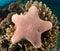 Stock Image :  Filón y coral Maldivas