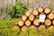 Stock Image : Firewood preparation.