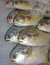 Stock Image : Fish