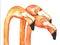 Stock Image : Flamingos Watercolor
