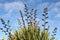 Stock Image : Flax reaching high