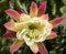 Stock Image :  Flor tropical grande